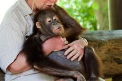solveiga mikelsone foto, ceļojumi, mērkaķi, šimpanze, mazulis
