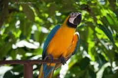 solveiga mikelsone foto, ceļojumi, bali, putni, papagailis