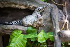 solveiga mikelsone foto, ceļojumi, dzīvnieki, tīģeris, lielie kaķi