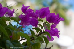 solveiga mikelsone foto, ceļojumi, bali, ziedi, daba,