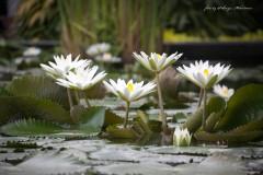 solveiga mikelsone foto, ceļojuni, ziedi, daba