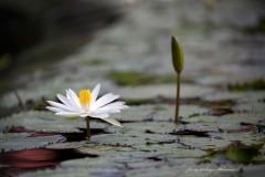 solveiga mikelsone foto, ceļojumi, daba, ziedi, ainava