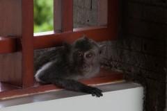solveiga mikelsone foto, ceļojumi, mērkaķi, dzīvnieki