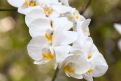 solveiga mikelsone foto, ceļojumi, daba, ziedi, skaistums