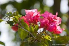 solveiga mikelsone, daba, ceļojumi, ziedi