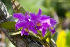 solveiga mikelsone foto, ceļojumi, daba, ziedi, orhidejas