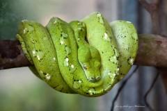 solveiga mikelsone foto, čūskas, rāpuļi, pitons, ceļojumi