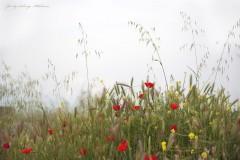 solveiga mikelsone foto, daba, vasara, pļava, magones, turcija, pamukale
