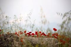solveiga mikelsone foto, magones, pļava, ziedi, vasara, turcija, pamukale