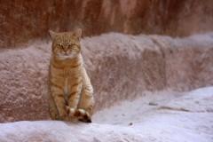 solveiga mikelsone, foto, ceļojumi, reportāža, ekskursija, dzīvnieki, kaķi, rudi kaķi, acis