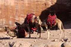 solveiga mikelsone, foto, ekskursijas, ceļojumi, reportāža, kultūra, cilvēki, vēsture, kamielis